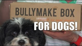 Bullymake Box Review- Subscription Box for Dogs! | EpicReviewGuys CC thumbnail