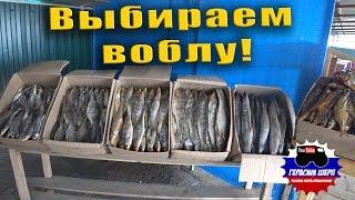 За рыбой в Астрахань! Домой домой домой! Как выбрать воблу!