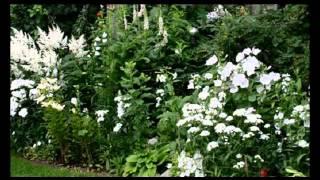 видео Дизайн клумб и цветников на даче своими руками: монохромные варианты