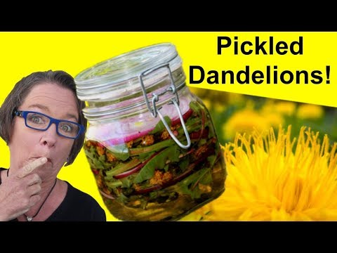 ✅ Pickled Dandelion: Your Next Favorite Dandelion Recipe - Greens, Flowers, Blossoms