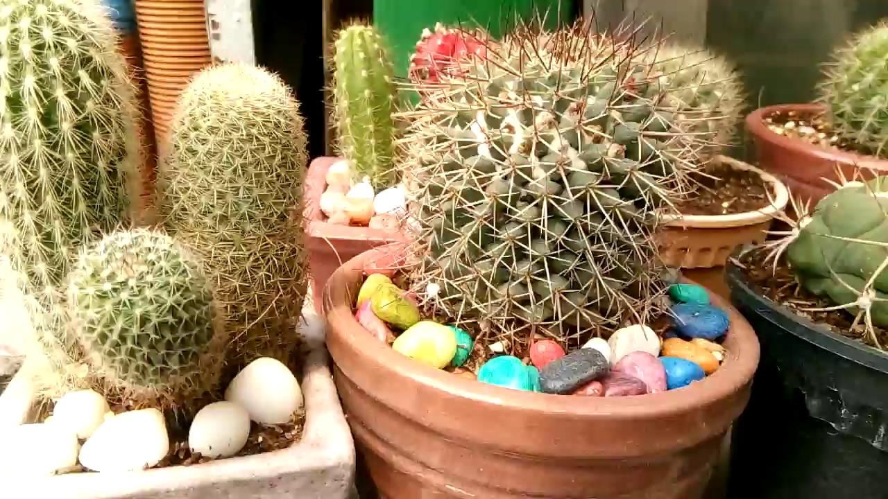 Biggest bonsai and cactus tree nursery in dhaka | Nursery plants ...