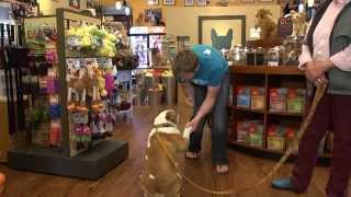 Small Business In Vancouver - Canine Utopia