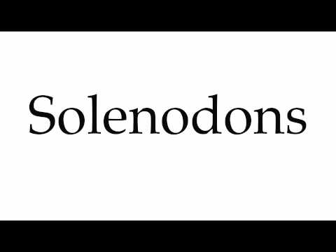 How to Pronounce Solenodons