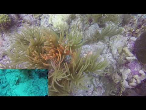 Rainbow Reef Dive #8 - Molasses Reef