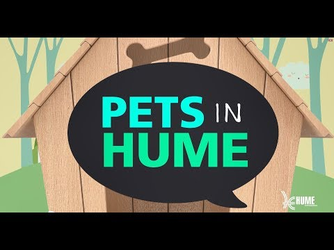 Pets in Hume - Choosing the right dog for you!
