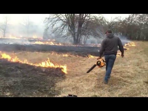 Controlled burn #2 for 2016