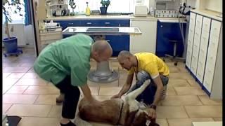 Дрессировка собак дома с нуля - как научить собаку лежать