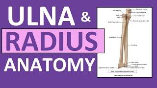 Radius and Ulna Anatomy and Physiology: Forearm Bones