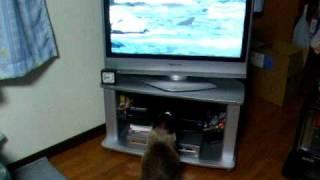 自然紀行ものが大好きなメス猫です.