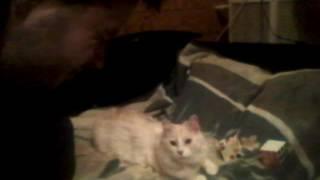 Кот подмигивает в ответ на подмигивание.