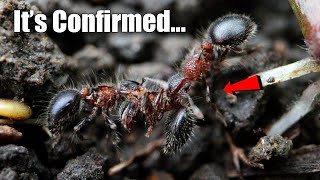 What Scientists Discovered About Mystery Ant # 555 | The Big Surprise Ending