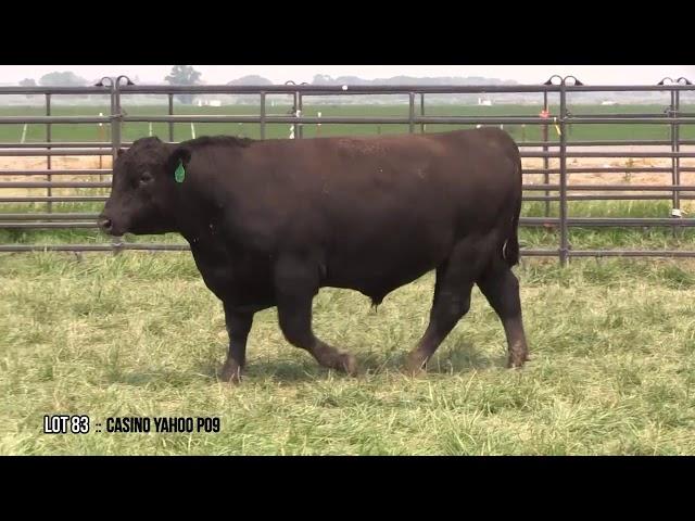 Dal Porto Livestock and Rancho Casino Lot 83