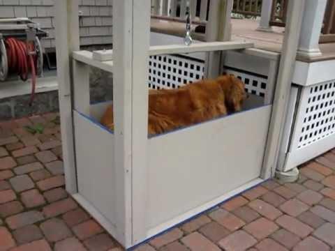 Kati S Dog Elevator Youtube