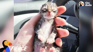 Newborn Kitten Who Was Frozen Solid Grows Up To Be Strong And Feisty | The Dodo Little But Fierce thumbnail