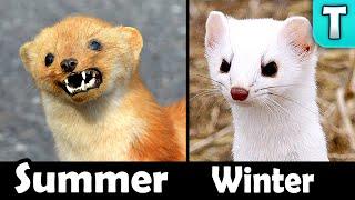 8 Animals that TURN WHITE in Winter!