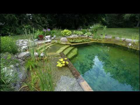 Экопруд, демонстрация его отдельных составляющих, сравнение с внешним видом бассейна