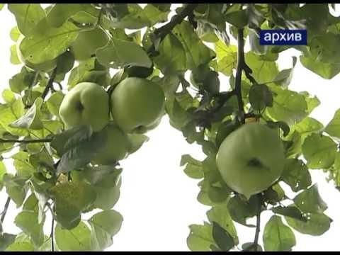 Сергиево-Посадский ДК имени Гагарина приглашает принять участие в конкурсе на лучший урожай