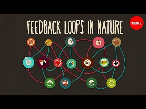 Video image: Feedback loops: How nature gets its rhythms - Anje-Margriet Neutel