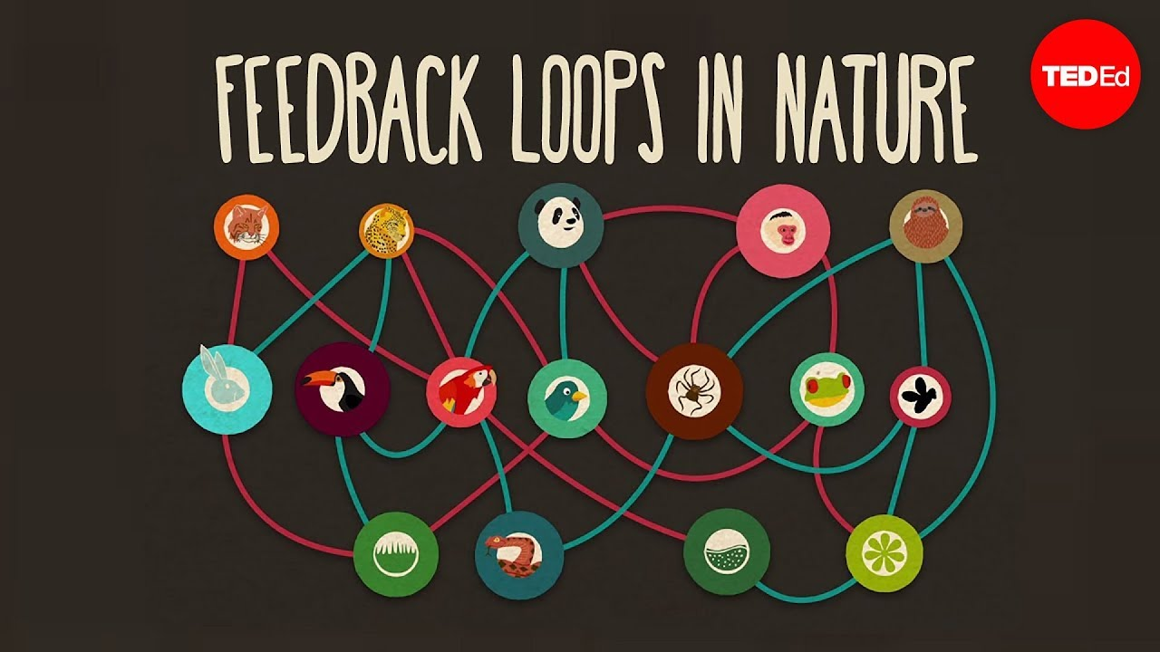 Feedback loops: How nature gets its rhythms - Anje-Margriet Neutel ...