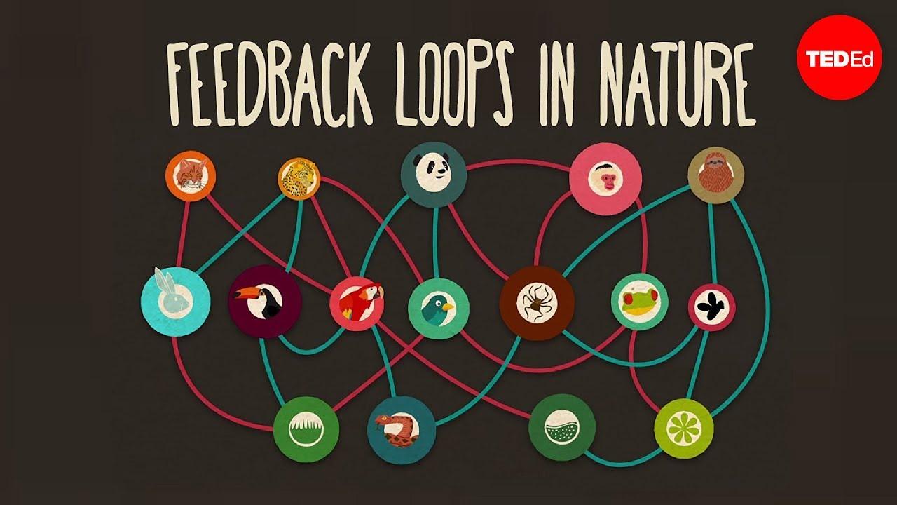 Feedback Loops How Nature Gets Its Rhythms