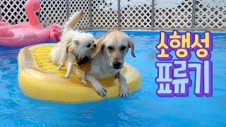 ENG SUB _ Let's have fun with a big swim tube! Dog & puppy