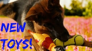 German Shepherd Concert With New Toys