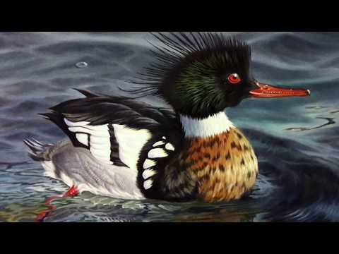 Painting Ducks - The Evolution Of A Winning Duck Stamp