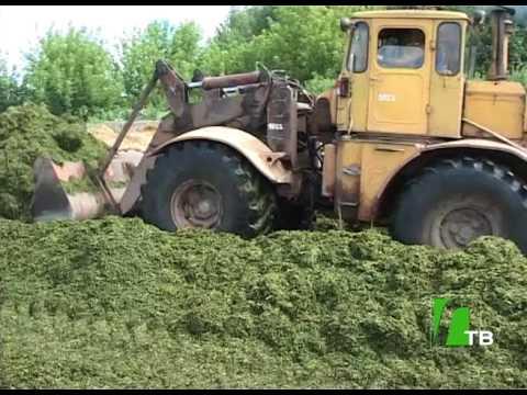 видео: 2017 08 09 Заготовка кормов в ОАО Нива