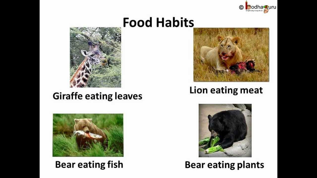 Science - Animal type -- By eating Habits - Telugu - YouTube