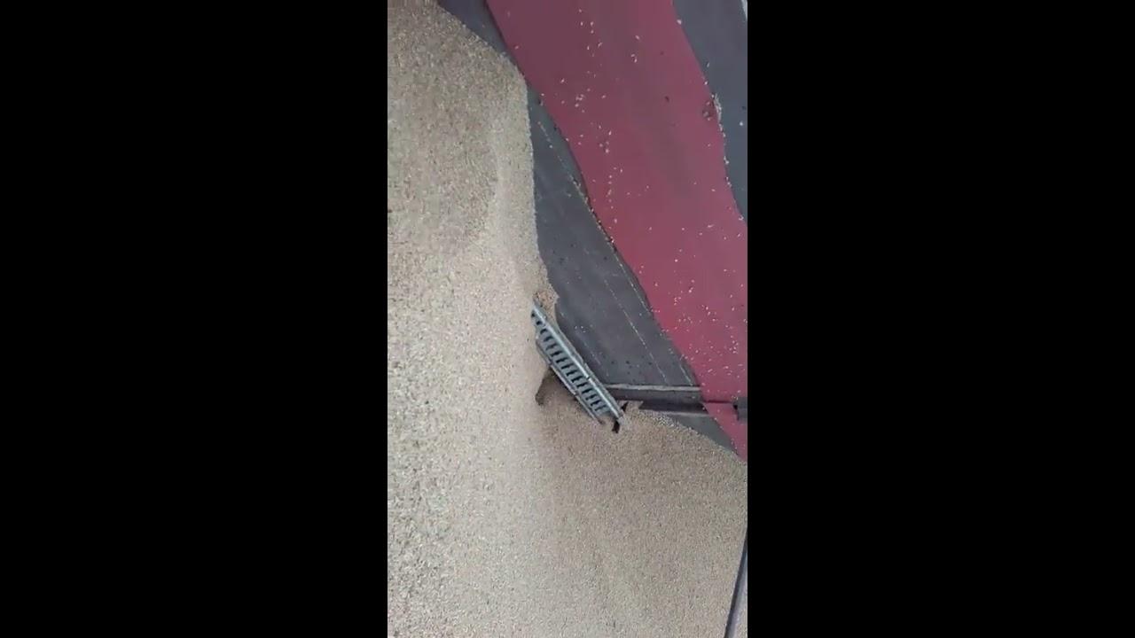 Niesamowite Rozładunek pszenicy na suszarnie żmiją hydrauliczną w podłodze CW22
