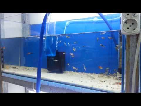 Hobihanem - Akvaryumda Dip Çekimi (Su Değişimi) Önemi & Nasıl Yapılır?