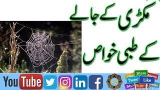 Video Makdi Ke Jala Ke Tibbi khwas | Benefits of Spider Web | Makri ke Jaly se Ilaj | Treatment with Web | download MP3, 3GP, MP4, WEBM, AVI, FLV Oktober 2018