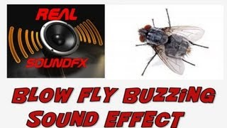 Fly blowfly buzzing flying sound effect - realsoundFX
