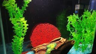 Посылка для аквариума - растения искусственные.