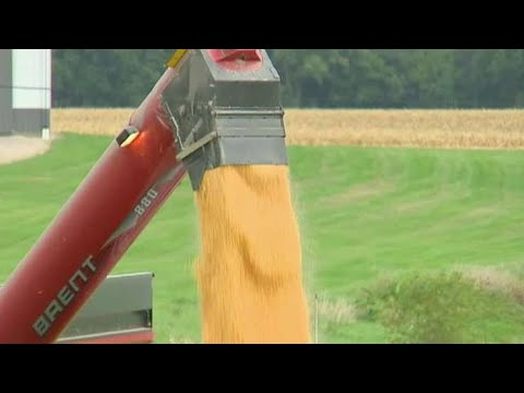 Chinese state firms purchase over 1M tons of US soybeans