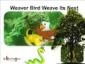 Science – Bird and their nest – English