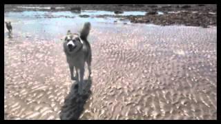 Go Rogue! Dog Training Advert