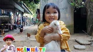 Con gà con ngan bé ngân hà đi chăn đàn gà trong sân ❤Ngân hà TV❤