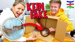 WHAT'S IN THE BOX Challenge 📦 Echte Tiere 🦑🐷🐮🐓 KEIN FAKE 😱 TipTapTube 😁 Familienkanal 👨‍👩‍👦‍👦