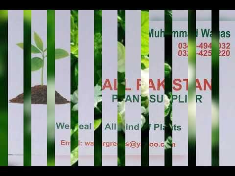 WaqarGreens Nursery Farm Pattoki