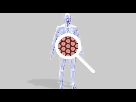 Au coeur des organes : La respiration cellulaire