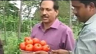 Karnataka: Horticulturists develop high-yielding hybrid varieties of tomatoes and peas