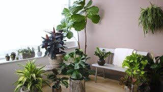 Houseplant Lighting 101 - Martha Stewart