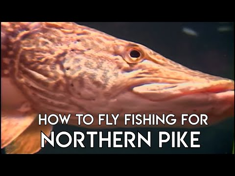 Pike Fly Fishing Basics