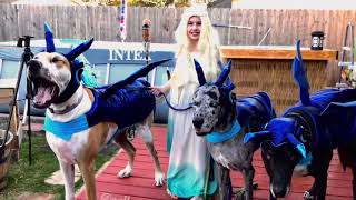 Great Dane Dogs Wearing Dragon Costumes Pose With Girl - 1075280