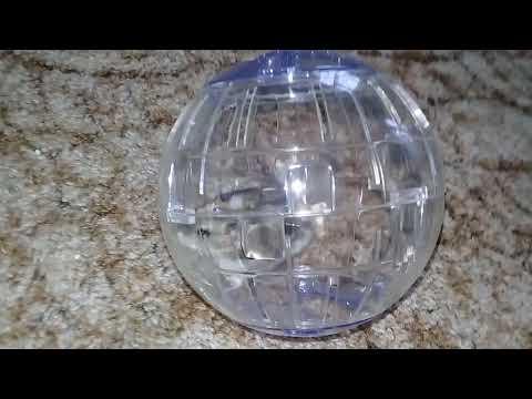 Обзор на шарик для хомяка
