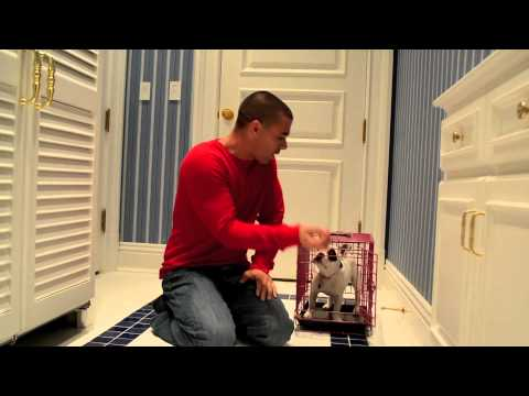 Introducing a French Bulldog Puppy to a Crate