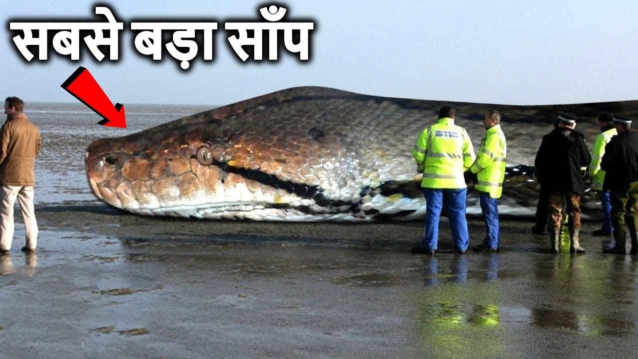 क्या हो अगर सबसे बड़ा साँप ( Titanoboa आज भी जिन्दा होता ) What If Titanoboa Snake Didn't Go Extinct