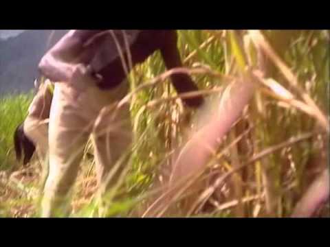Slavery in Jamaica, Part 1