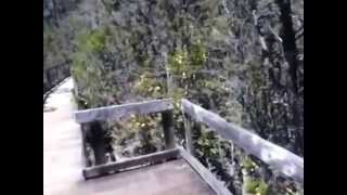 Pygmy Forest Pt2